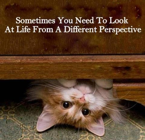 life_perspective