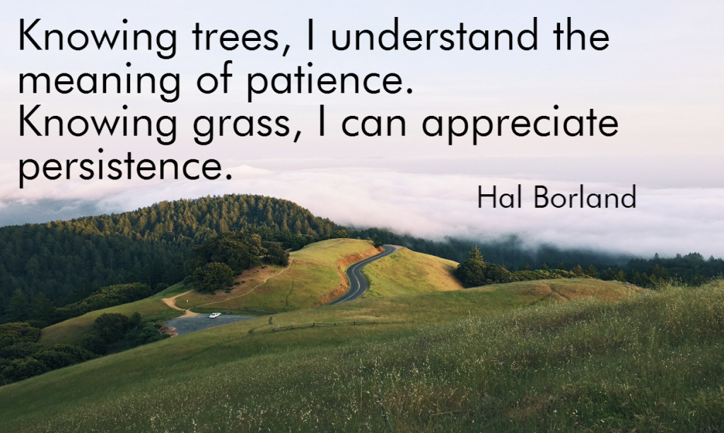 Quote- Knowing trees, I can understand the meaning of patience. Knowing grass, I can appreciate persistence. Hal Borland